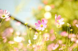 近くの花のアップの写真・画像素材[1514796]