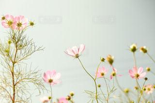 近くの花のアップの写真・画像素材[1514812]
