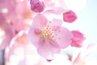 近くの花のアップの写真・画像素材[1826846]