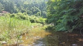 自然,屋外,川,水面,水辺,景色,樹木,新緑,草木,水辺の森,水資源,河川地形