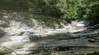 自然,屋外,川,水面,水資源