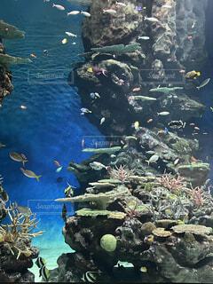 自然,魚,水族館,水面,岩,水中,草木