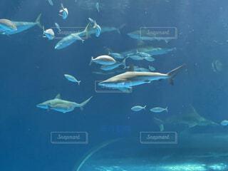 海,動物,魚,屋外,水族館,水面,葉,泳ぐ,水中,サメ,ダイビング,フィン,シュノーケ リング,海洋生物学