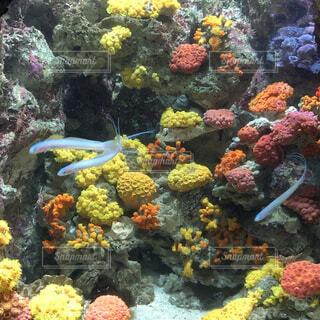 自然,魚,水族館,葉,水中,珊瑚礁,コーラル,海洋無脊椎動物