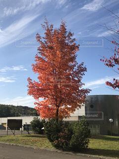 家の前の木の写真・画像素材[4938899]