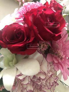 薔薇の写真・画像素材[4943951]