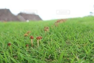 花,芝生,屋外,草,草木,きのこ
