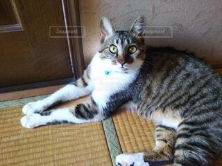 猫,空,動物,屋内,床,子猫,地面,日陰,草木,ネコ科,オーク