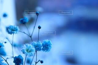かすみ草の写真・画像素材[4907342]