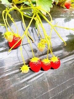 自然,果物
