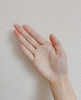 手,指,爪