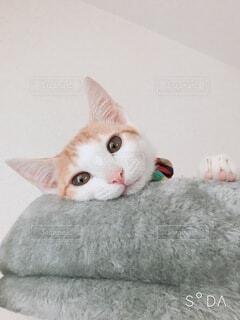 猫,動物,屋内,景色,寝転ぶ,子猫