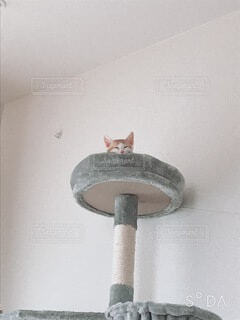 猫,動物,屋内,壁