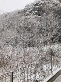 自然,建物,冬,雪,屋外,樹木,フェンス,霜