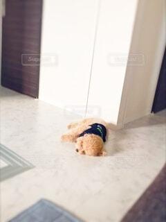 犬,屋内,景色