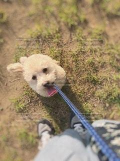 犬,動物,屋外,草,少し