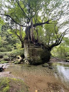 自然,風景,屋外,湖,川,水面,樹木,地面,草木,ウィロー