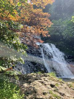 自然,秋,屋外,水面,滝,樹木