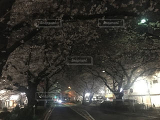 春の写真・画像素材[419348]