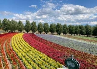 自然,風景,空,花,屋外,赤,雲,景色,草,樹木,草木