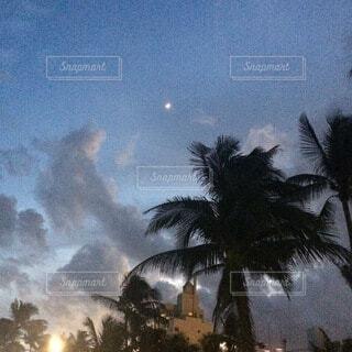 自然,風景,空,夜,雲,アメリカ,月,ヤシの木,草木