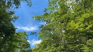 空,屋外,緑,雲,青空,青,田舎,山,樹木,山登り,草木