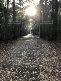 自然,風景,秋,森林,屋外,樹木,地面