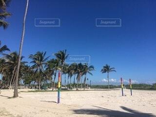 空,屋外,ビーチ,砂浜,海岸,樹木,ヤシの木,草木,パーム,ヤシ目