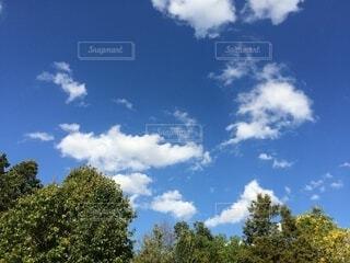 自然,風景,空,屋外,雲,樹木,草木