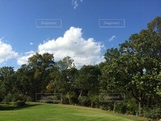 空,屋外,雲,景色,草,樹木,草木