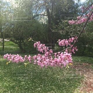 花,屋外,樹木,草木,ブロッサム