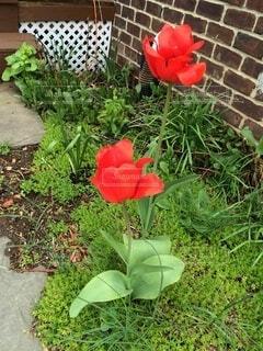花,屋外,草木