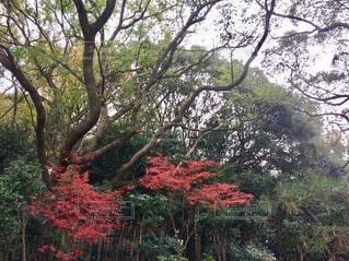 空,花,秋,屋外,葉,樹木,草木,カエデ