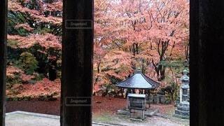 秋,屋外,神社,窓,樹木