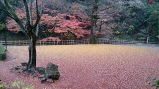風景,秋,屋外,落ち葉,樹木,草木