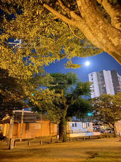 自然,風景,空,公園,夜,ビル,木,街,月