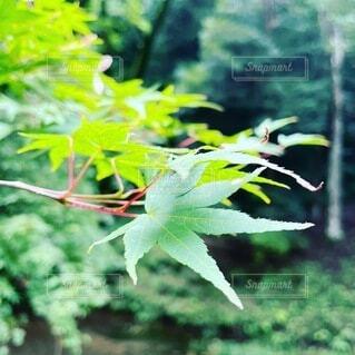 秋,屋外,緑,葉,樹木,草木