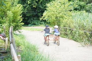 子ども,自転車,屋外,草,樹木,地面,姉妹,草木,車両,ホイール,陸上車両,自転車のホイール