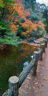 自然,公園,秋,屋外,水面