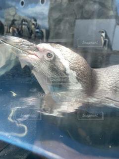 動物,鳥,水族館,水面,ペンギン,海獣