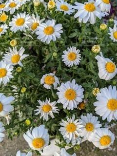 花のクローズアップの写真・画像素材[4918391]