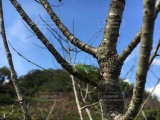 風景,空,木,屋外,枝,昼寝,樹木,カエル,蛙,草木