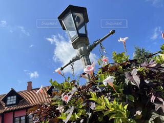 自然,花,夏,秋,緑,植物,晴れ,景色,白い,ランプ,癒し,昼,草木,パステルピンク