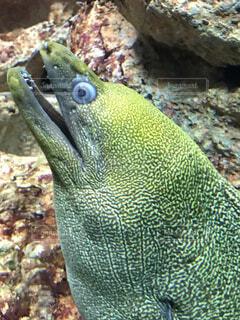 動物,魚,水族館,水中,ウツボ,海洋無脊椎動物