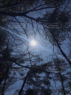 自然,空,屋外,太陽,樹木,月,一筋の光