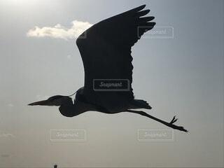 空,動物,鳥,屋外,飛ぶ,群れ,羽ばたき,海鳥