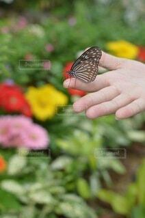 この指とまれの写真・画像素材[4938579]