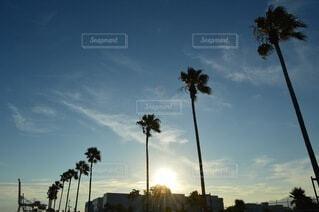 カリフォルニア、、、ではないの写真・画像素材[4938582]