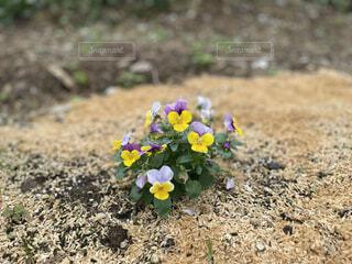 花,春,屋外,草,地面,草木,グッズ,少し,フローラ