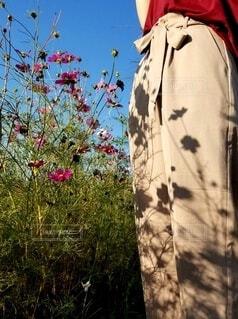女性,風景,花,秋,花畑,屋外,コスモス,晴れ,青空,影,人,服,秋桜,ベージュ,影絵,花柄,草木,日中,ワイドパンツ